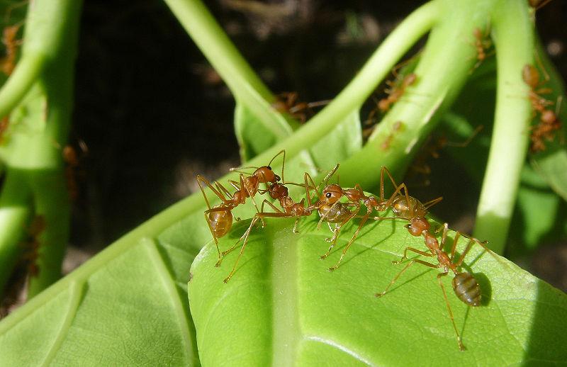 semut dalam ekosistem.jpg